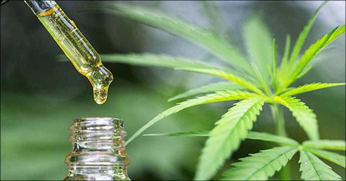 Økologisk Cannabis olie, CBD Oil indeholdende 30 ml. olie svarende til ca. 600 dråber, 1 stk. eller 3 stk. Værdi op til kr. 1314,-